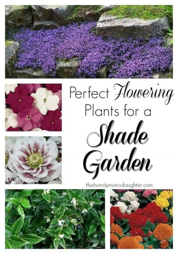 Forget the hostas and ferns! These beautiful flowers will give you the color you crave in your shade garden. - The Handyman's Daughter