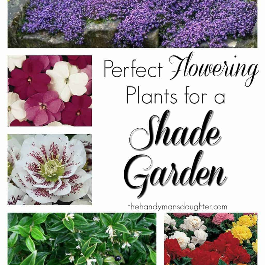 These flowering plants will thrive in the shade!