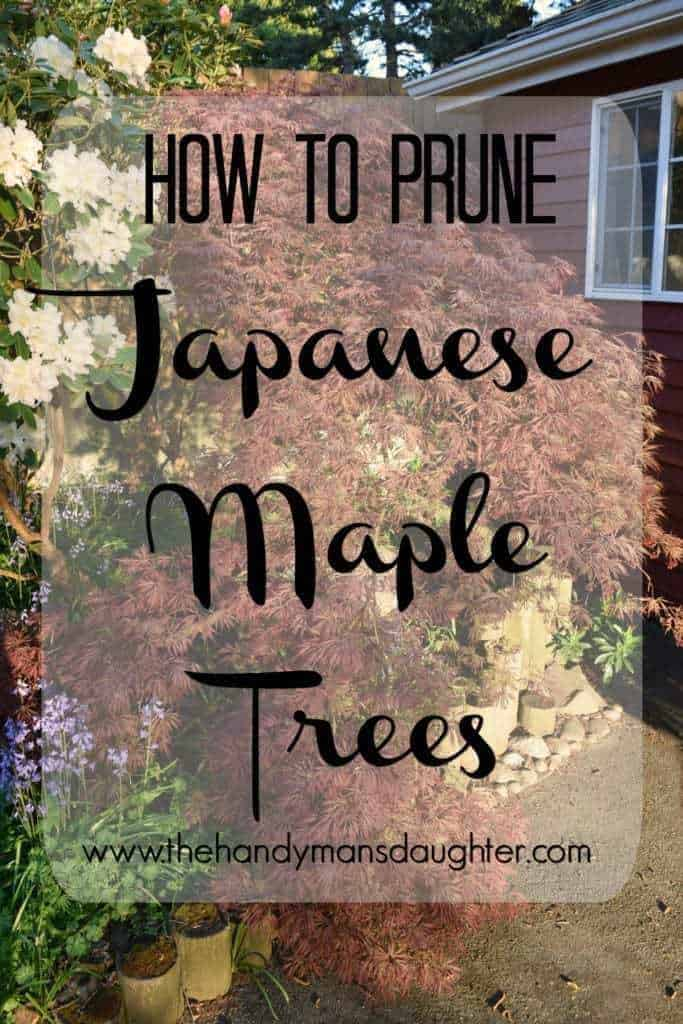 "Japanese maple tree with text overlay ""How to Prune Japanese Maple Trees"""