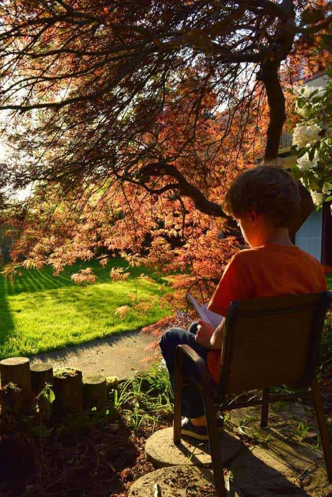 With the dead under layer removed, there is plenty of room for reading under the beautiful Japanese maple tree. - TheHandymansDaughter.com