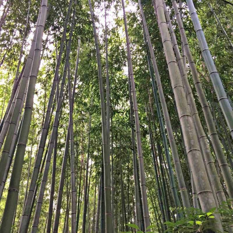 How to Plant Bamboo {Without it Taking Over the Neighborhood}