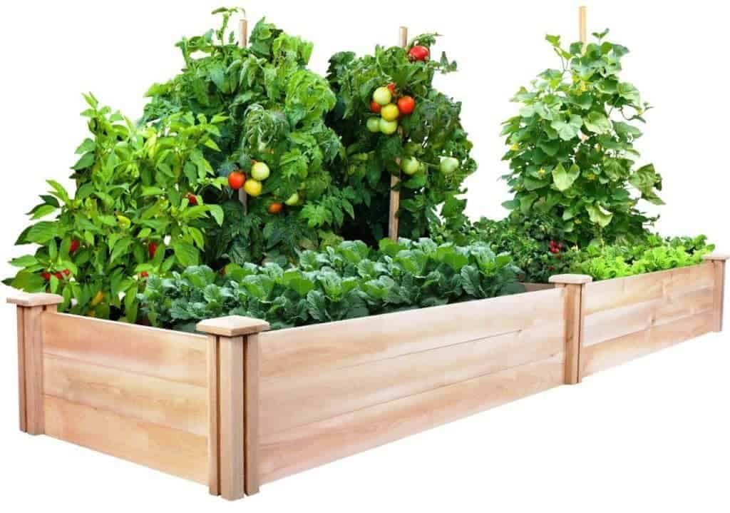 raised planter beds perfect for growing bamboo
