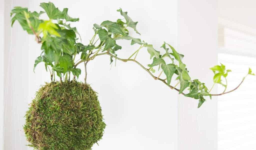 Make Your Own Kokedama (Japanese Moss Ball)