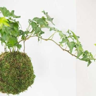 How to Make Kokedama (Japanese Moss Ball)