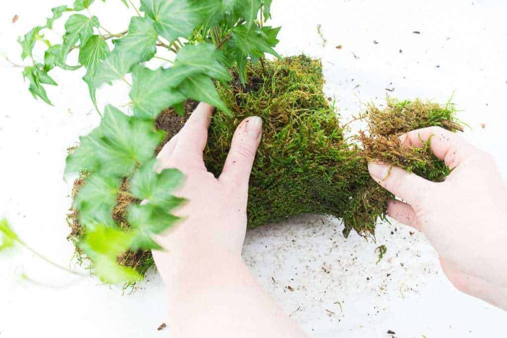 Form the moss around your kokedama root ball, tearing away any excess that might make the ball too bulky.