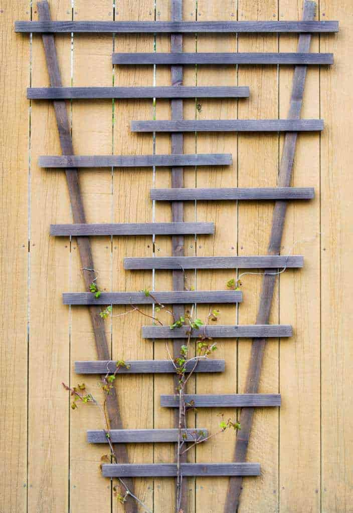 DIY trellis on fence with vines