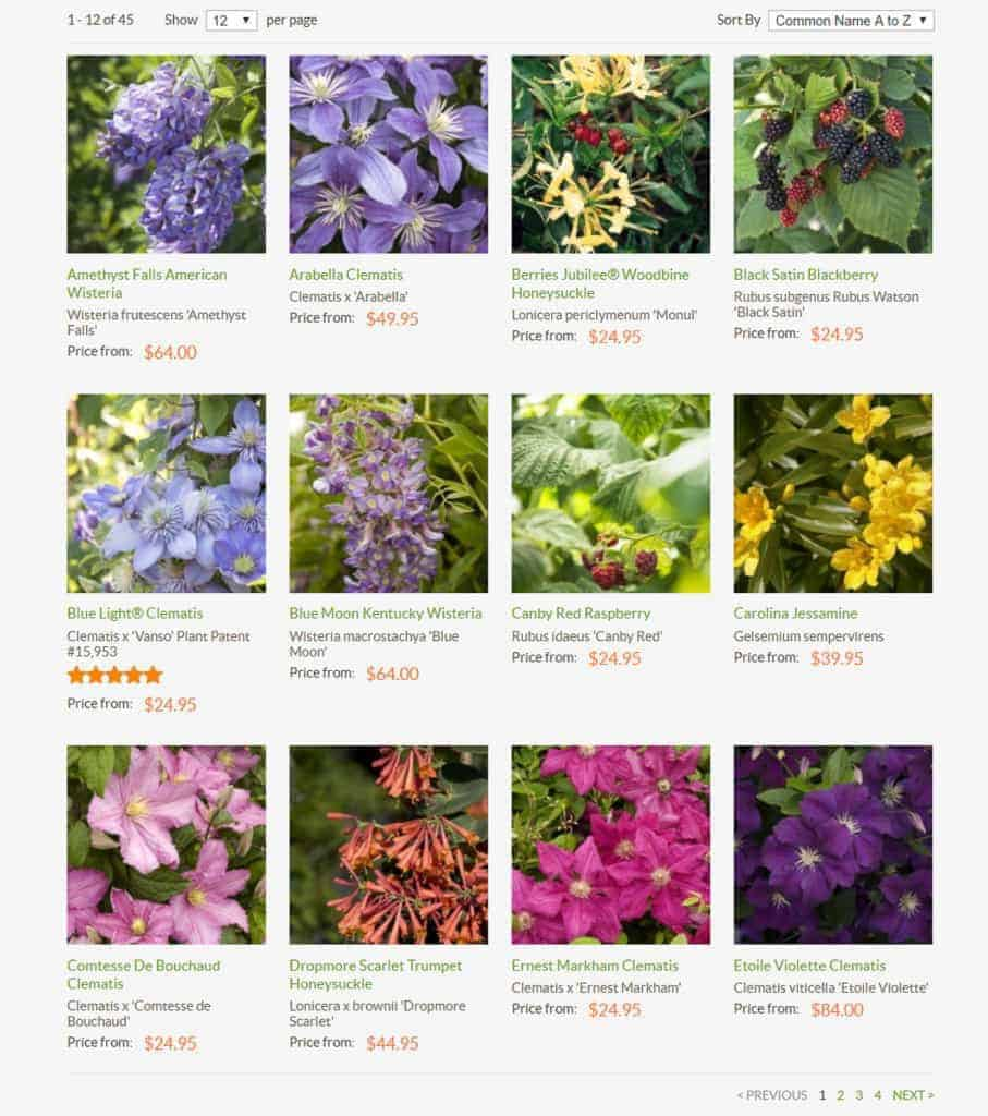 There are so many beautiful plants available from Monrovia!