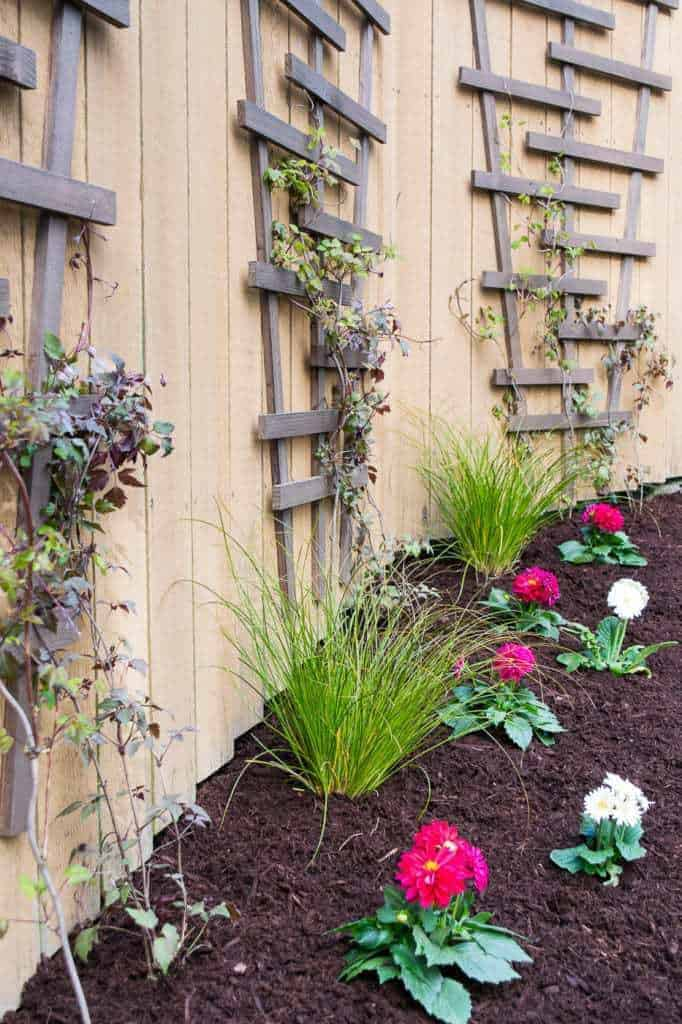 Fill the garden bed in front of your climbing vines with a bright pop of color to draw your eye to the space.