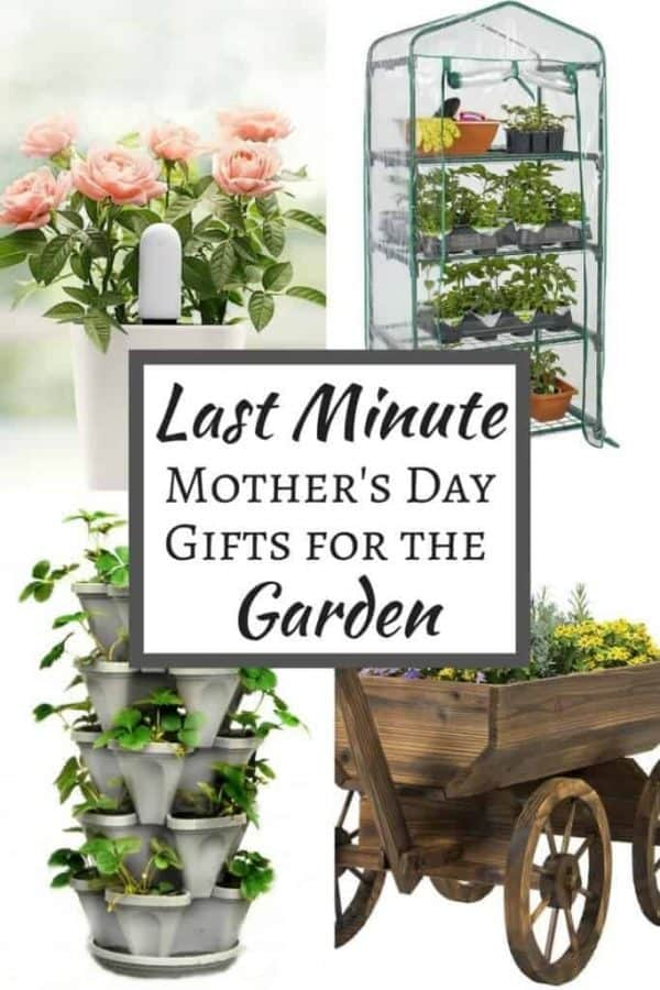 Did Mother's Day completely slip your mind this year? Get any of these last minute Mother's Day gifts for Mom's garden shipped with Amazon Prime in two days or less!