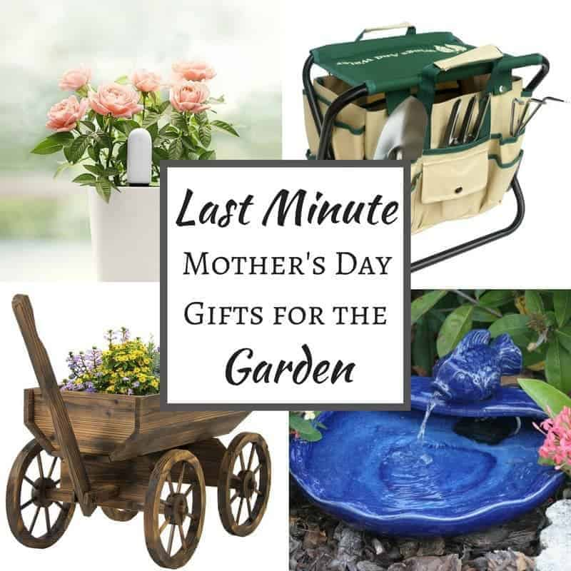 9 Last Minute Mother 39 S Day Gifts For The Garden The