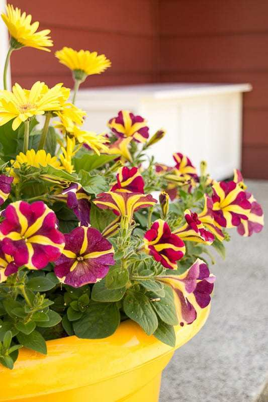 Spruce up your front porch with brightly colored flowers! Monrovia's website will help you pick out the best plants for your garden.