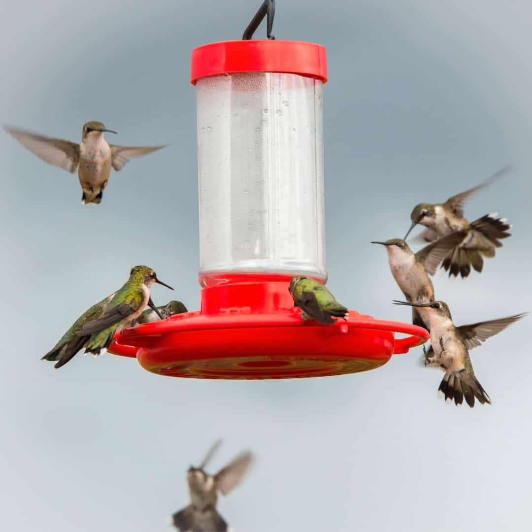 hummingbirds around best hummingbird feeder