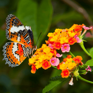 Create the perfect butterfly habitat garden to have these delicate creatures in your yard all summer long!