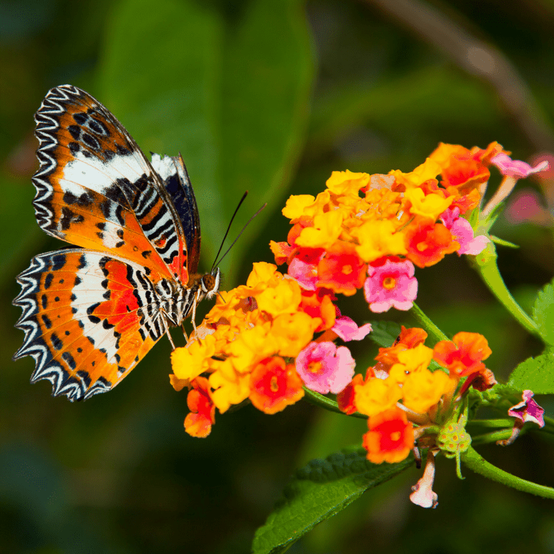 Tips for Creating a Hummingbird and Butterfly Habitat Garden