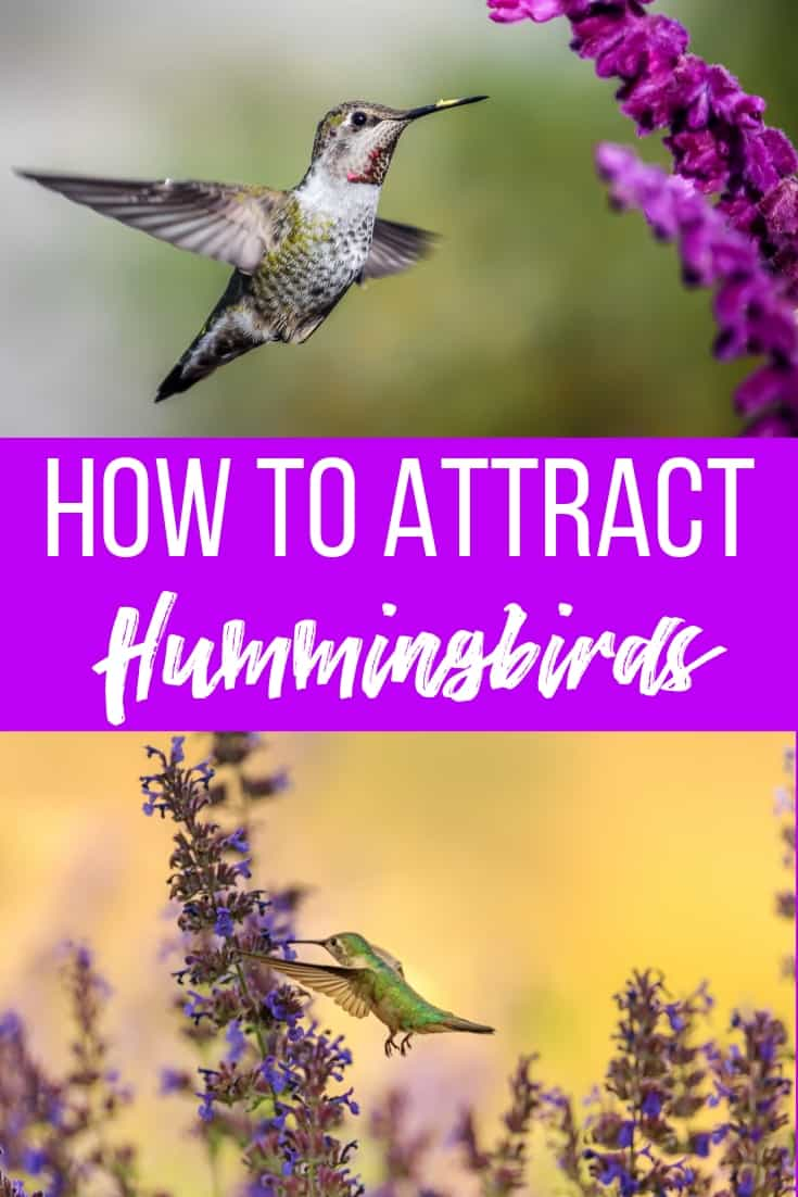 How To Attract Hummingbirds And Butterflies To Your Garden The