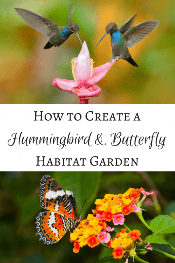 Create a hummingbird and butterfly habitat garden that will have these winged creatures flying around your yard all summer long! | hummingbird flowers | hummingbird garden | butterfly flowers | butterfly garden