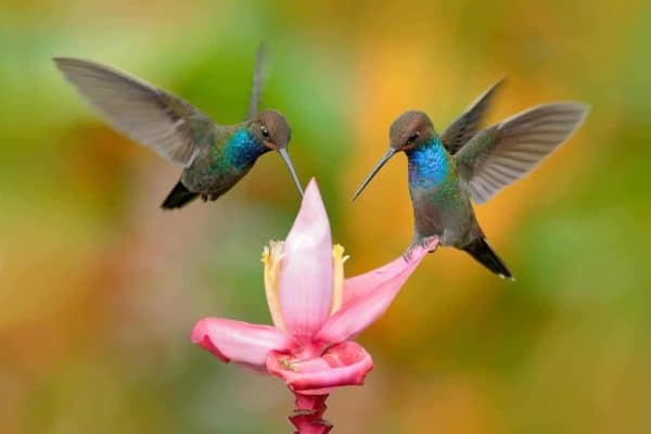 Planting the right flowers can turn your yard into a habitat garden for hummingbirds!
