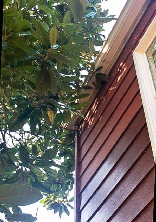 Our magnolia tree was touching the roof, creating a squirrel super-highway!