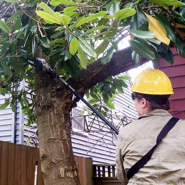 Trimming branches before winter is an important part of landscape maintenance.
