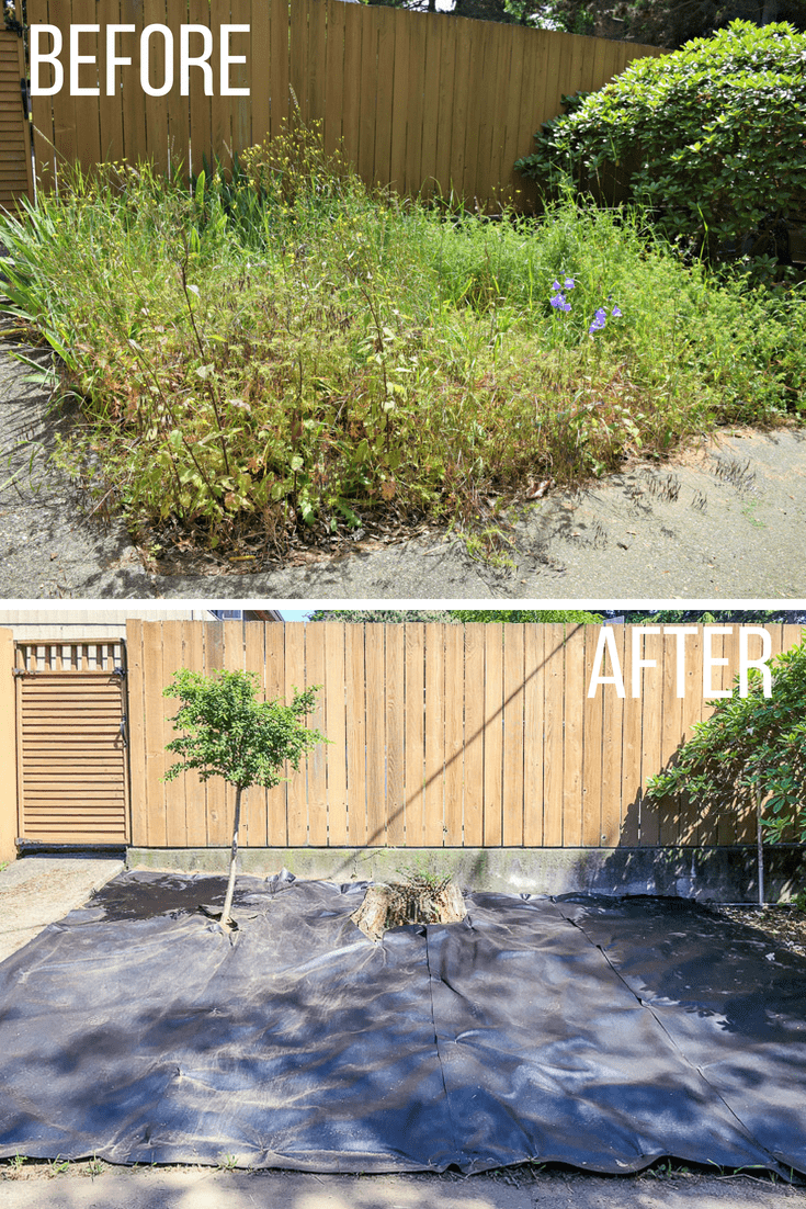 before and after of overgrown garden