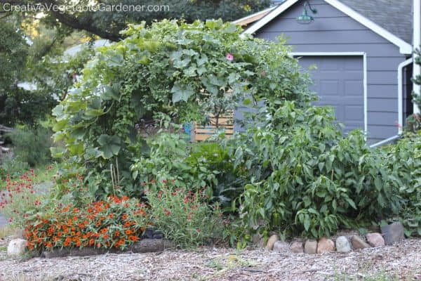 curved trellis covered with plants