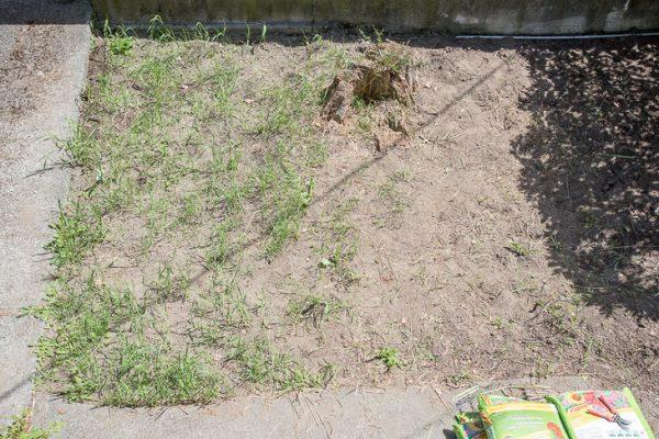 overgrown garden weeding completed