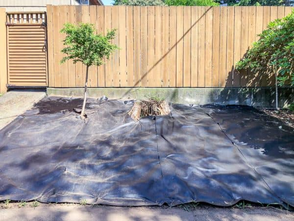 newly cleared garden with landscaping fabric, stump and new tree