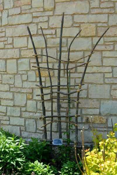 DIY trellis made from sticks