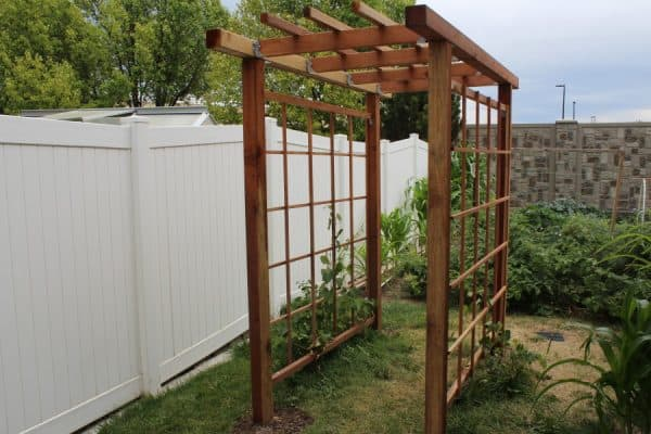 DIY grape arbor tunnel