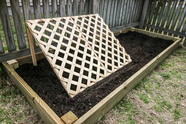 cucumber trellis in raised garden bed