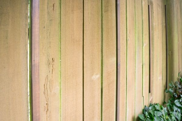 vertical supports for clematis trellis along fence