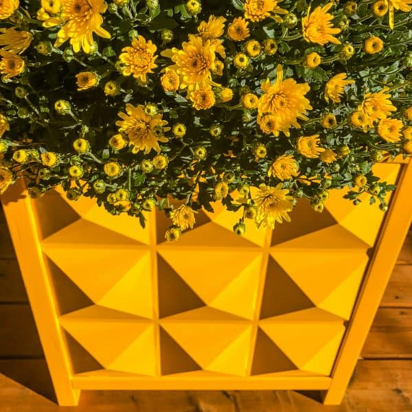 yellow fall mums in yellow modern planter