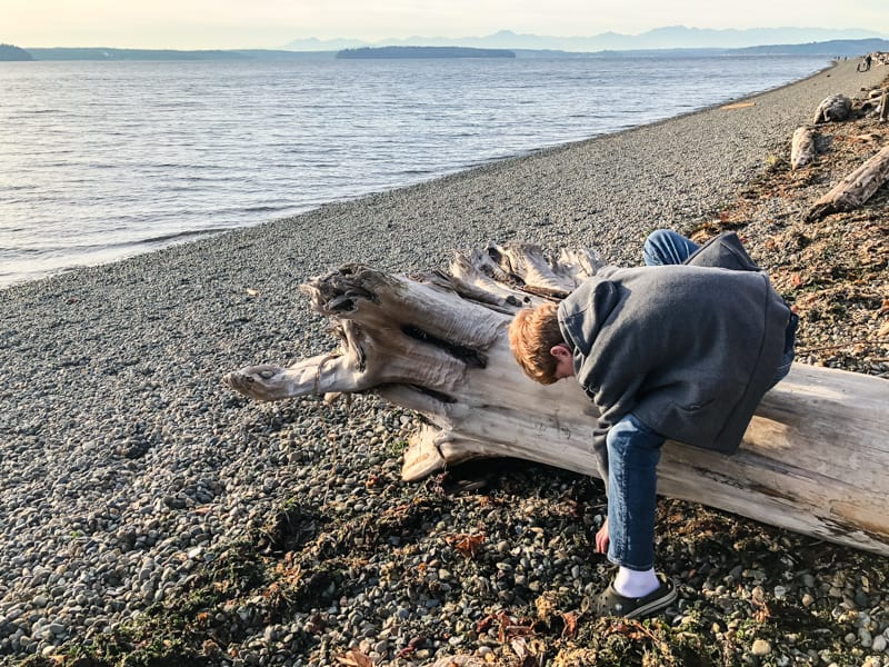 rocky beach with boy collecting driftwood