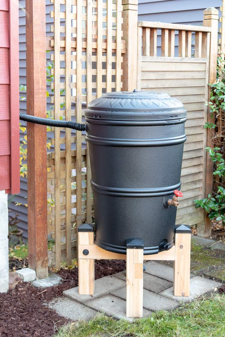 black rain barrel on DIY rain barrel stand
