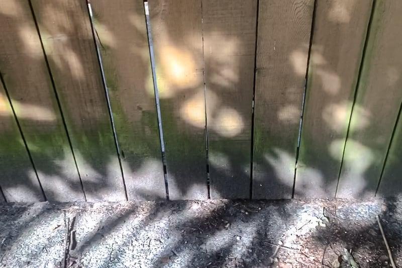 mildewed fence
