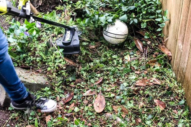 soccer ball hidden in overgrown garden foliage