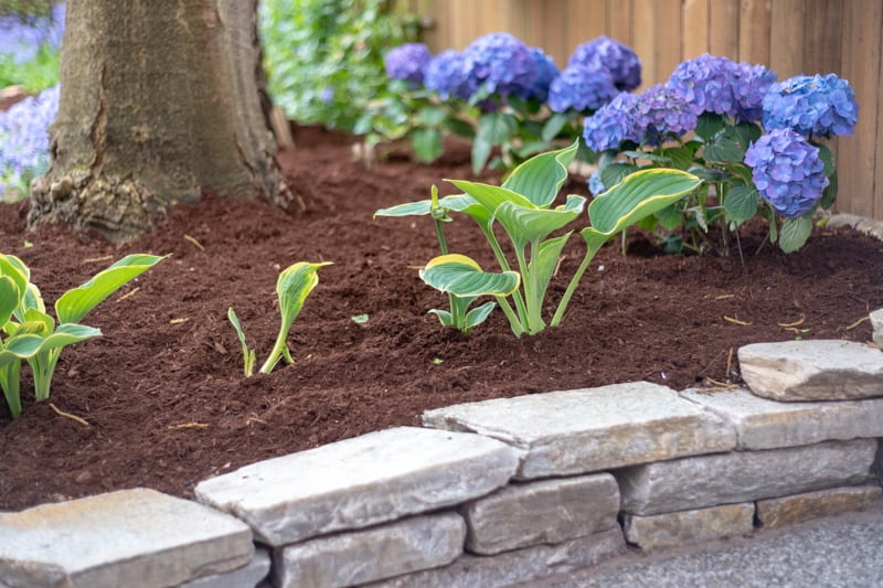 dry stack retaining wall for flower bed with hydrangeas and hostas