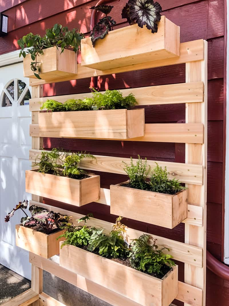 vertical garden wall planter with ferns in planter boxes