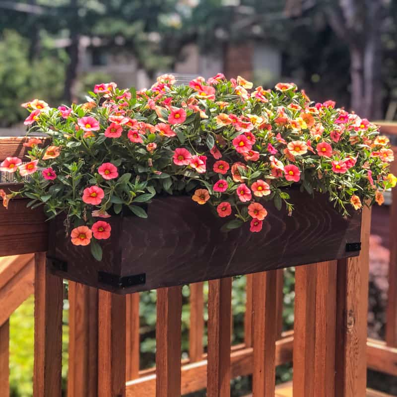 DIY deck railing planter box with pink flowers