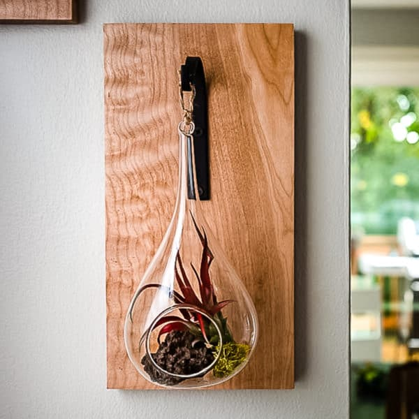 hanging air plant holder on wall