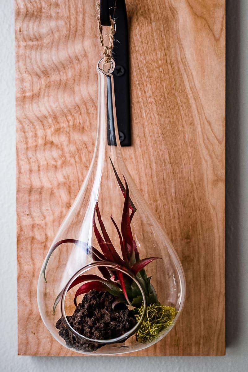 teardrop shaped terrarium air plant holder