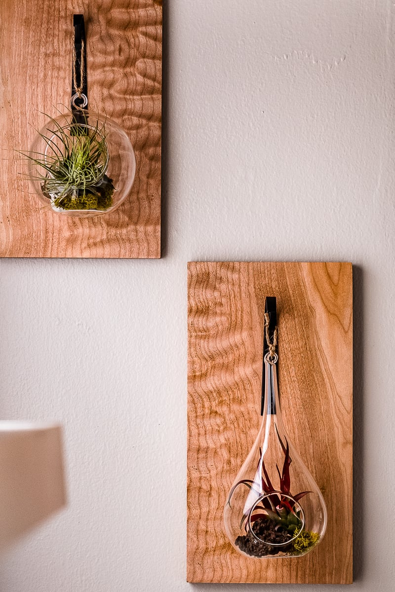 air plant holders on figured maple boards hanging on wall