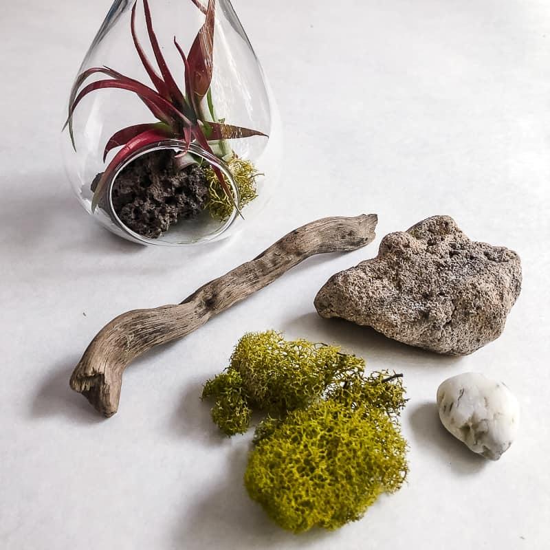 air plant display natural materials