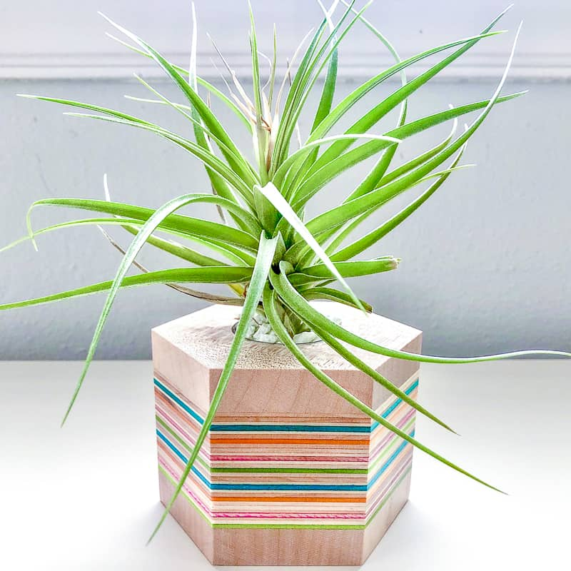 DIY air plant stand made from recycled skateboards