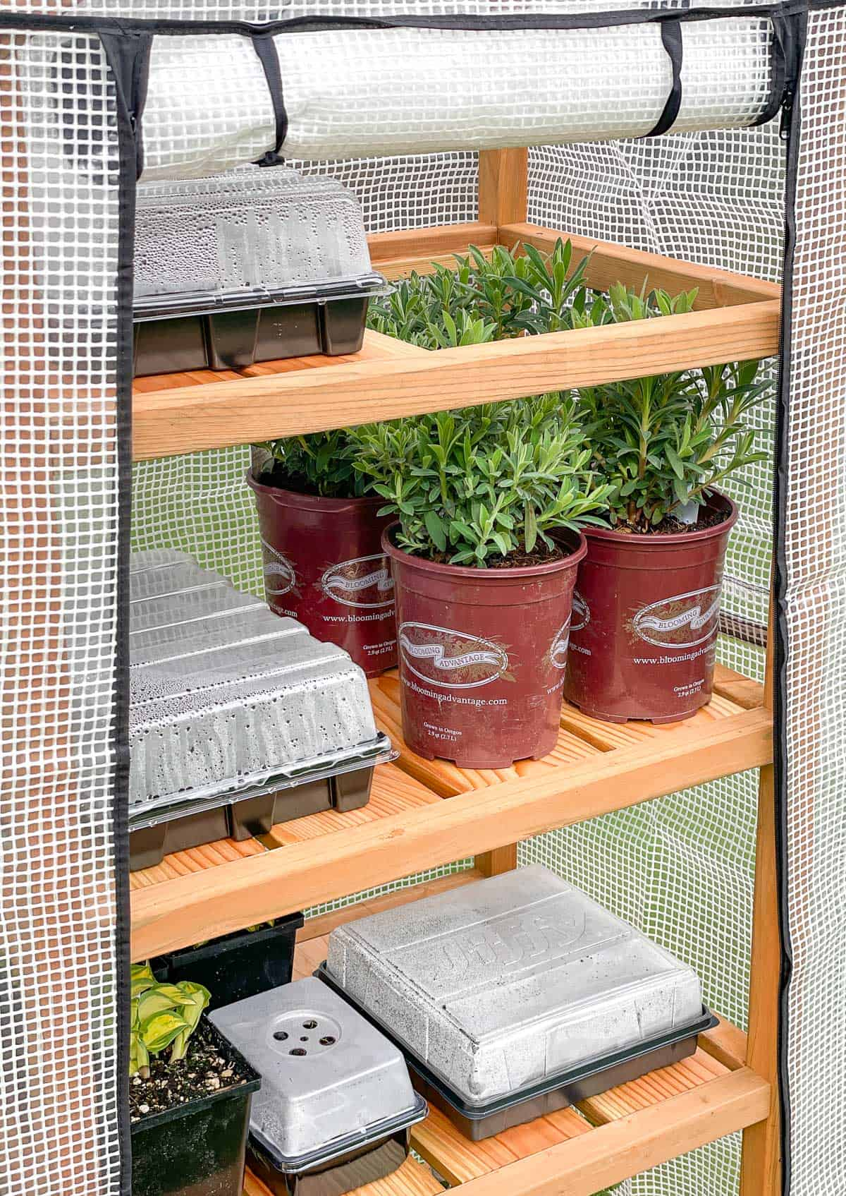 DIY mini greenhouse for seed starting