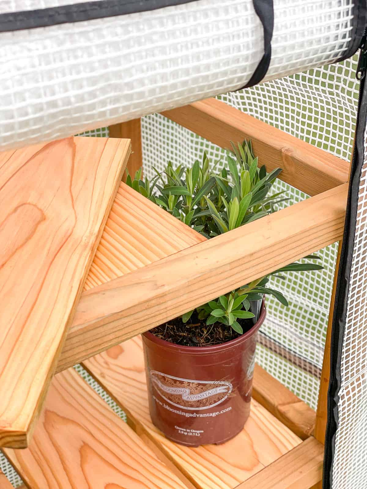DIY mini greenhouse with shelf slat removed to allow plants to grow taller