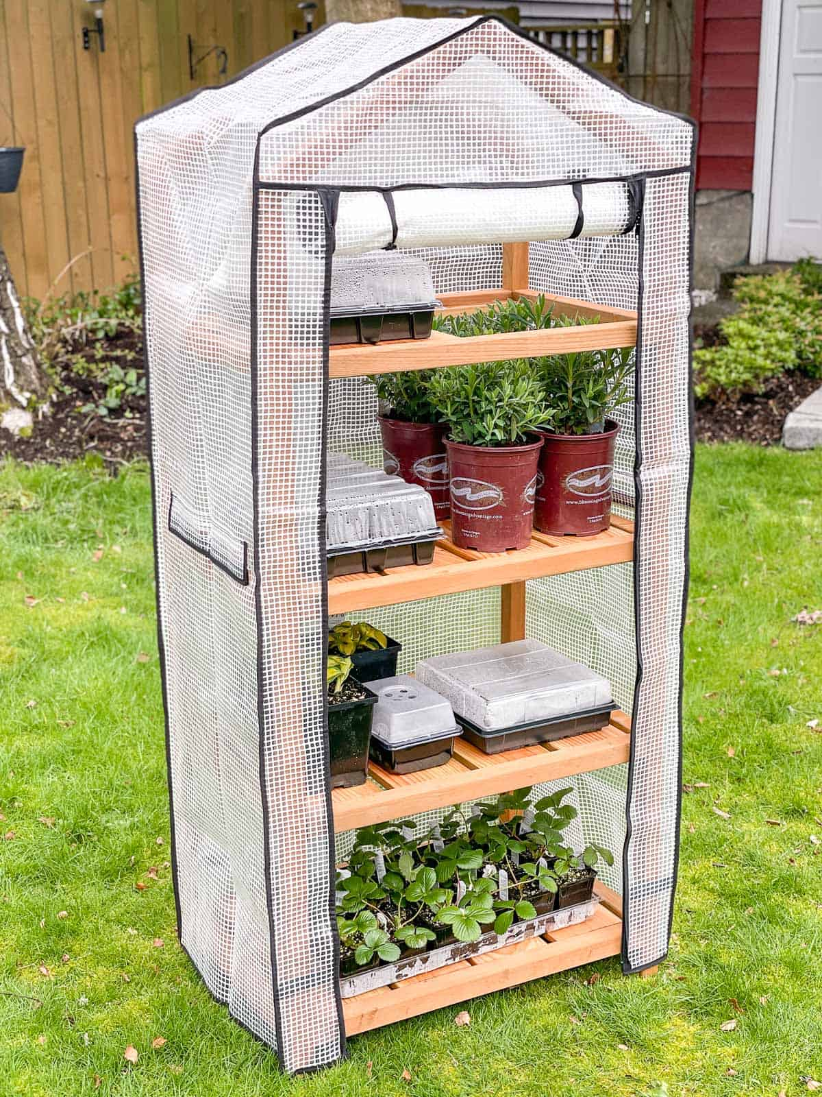 DIY tall greenhouse with cover