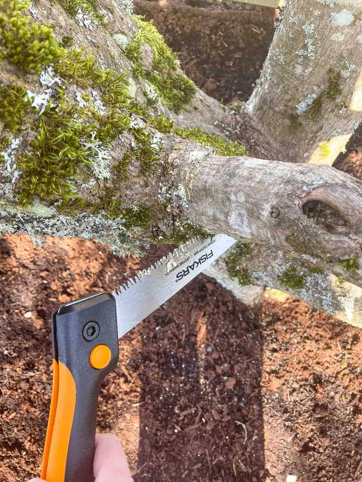 pruning saw cutting a branch