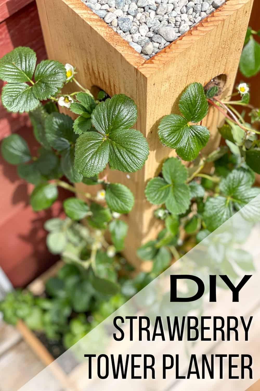 DIY strawberry tower planter