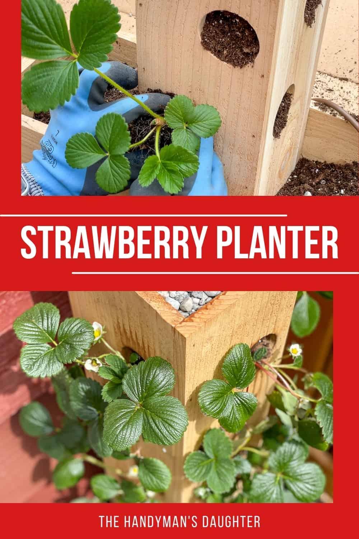 DIY strawberry planter box
